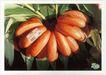 食品0007,食品,第十三届中国广告节获奖作品集,成熟 香焦 黄橙