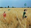 童趣0021,童趣,亲子教育,顽童 蜻蜓 捕捉
