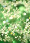 华贵和优雅背景0157,华贵和优雅背景,底纹,晶莹绿色