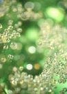华贵和优雅背景0158,华贵和优雅背景,底纹,华丽绿色