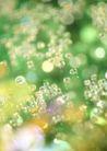 华贵和优雅背景0159,华贵和优雅背景,底纹,春季绿色