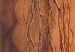 特殊背景0015,特殊背景,底纹,密积 根系 生长