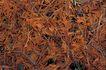 自然底纹0002,自然底纹,底纹,干枯 草堆 发黄