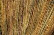 自然底纹0007,自然底纹,底纹,芦苇 杆条 割倒