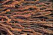 自然底纹0012,自然底纹,底纹,废旧 钢丝 曲卷