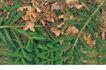 自然底纹0019,自然底纹,底纹,树枝 落地 黄叶