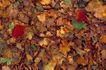 自然底纹0020,自然底纹,底纹,地面 枯萎 落叶