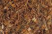 自然底纹0021,自然底纹,底纹,落叶 枯草 秋天