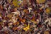 自然底纹0022,自然底纹,底纹,叶子 枯萎 秋季