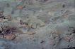 自然底纹0033,自然底纹,底纹,颜色 石材 岩石