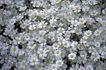 自然底纹0037,自然底纹,底纹,花朵 野花 赏花时节
