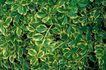 自然底纹0038,自然底纹,底纹,叶子 生物 底纹