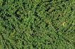 自然底纹0040,自然底纹,底纹,素材 绿色 草地