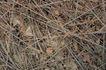 自然底纹0051,自然底纹,底纹,