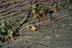 自然底纹0096,自然底纹,底纹,树木 植物 绿藤