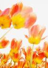 晴空下的鲜花
