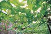 田园清蔬0005,田园清蔬,植物,瓜藤 垂吊 果实