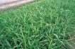 田园清蔬0014,田园清蔬,植物,青涩 禾苗 湿地