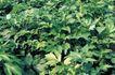 田园清蔬0017,田园清蔬,植物,青菜 茂盛 菜叶
