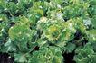 田园清蔬0019,田园清蔬,植物,特写 空心菜 顶尖
