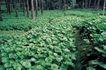 田园清蔬0030,田园清蔬,植物,青菜 树木 农业