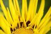 花卉无语0015,花卉无语,植物,写真 黄色 花朵