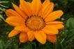 花卉无语0023,花卉无语,植物,菊花 芬芳 花卉