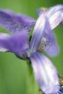 花卉无语0037,花卉无语,植物,蓝色 花艺 装饰物