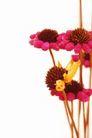 花卉无语0042,花卉无语,植物,美丽花卉