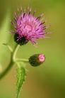 花卉无语0045,花卉无语,植物,