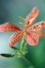 花卉无语0046,花卉无语,植物,