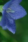 花卉无语0047,花卉无语,植物,