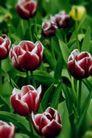 花卉无语0051,花卉无语,植物,