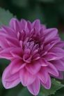 花卉无语0053,花卉无语,植物,