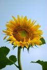花卉无语0054,花卉无语,植物,