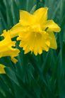 花卉无语0055,花卉无语,植物,
