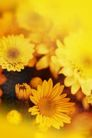 花卉无语0056,花卉无语,植物,