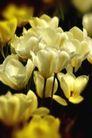 花卉无语0057,花卉无语,植物,