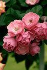 花卉无语0062,花卉无语,植物,