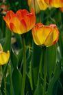 花卉无语0070,花卉无语,植物,
