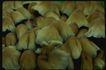 野生蘑菇0046,野生蘑菇,植物,