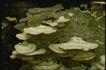 野生蘑菇0047,野生蘑菇,植物,