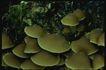 野生蘑菇0051,野生蘑菇,植物,