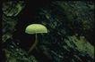 野生蘑菇0053,野生蘑菇,植物,