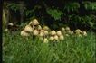 野生蘑菇0058,野生蘑菇,植物,
