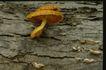 野生蘑菇0060,野生蘑菇,植物,