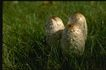 野生蘑菇0061,野生蘑菇,植物,