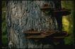 野生蘑菇0063,野生蘑菇,植物,