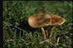 野生蘑菇0064,野生蘑菇,植物,
