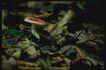 野生蘑菇0067,野生蘑菇,植物,